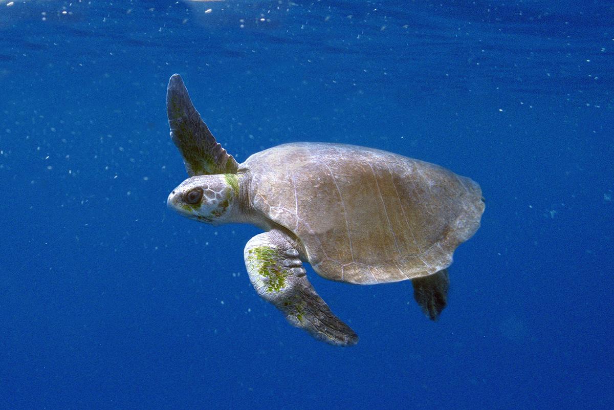 Фото морських тварин 11 фотография